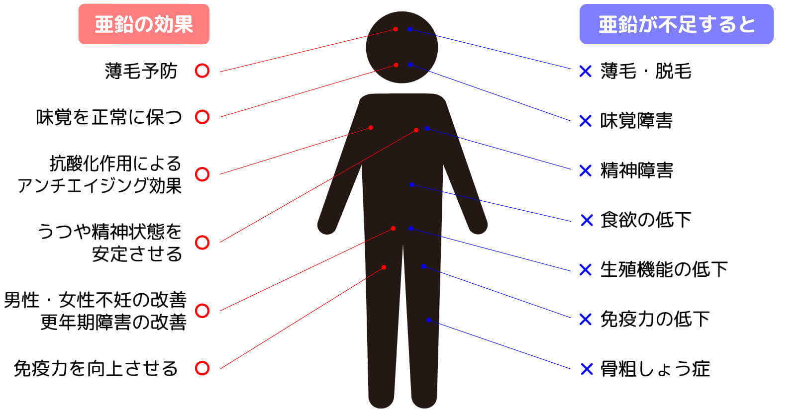 亜鉛の効果と亜鉛不足が引き起こす症状